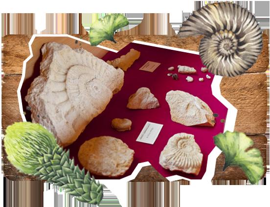 wystawa paleontologiczna